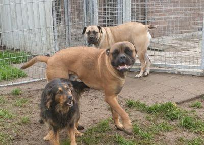 Hera, Hannes en sky